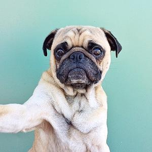 11 классных  звериных аккаунтов  в Instagram. Изображение № 41.
