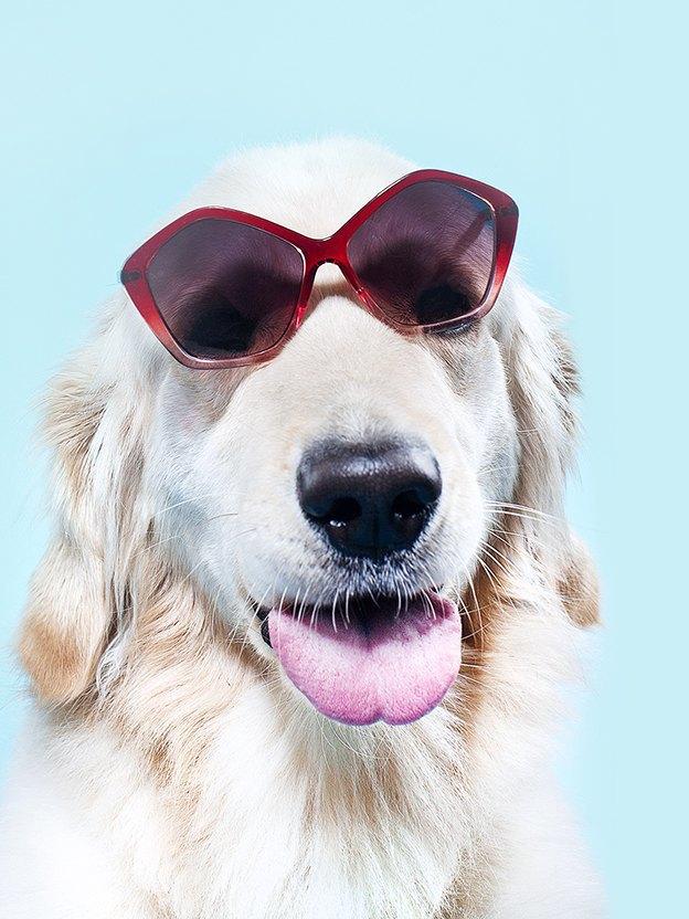 Ревизия: Солнцезащитные очки. Изображение № 1.