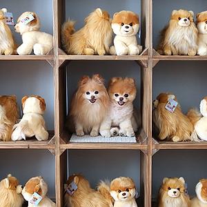 11 классных  звериных аккаунтов  в Instagram. Изображение № 24.