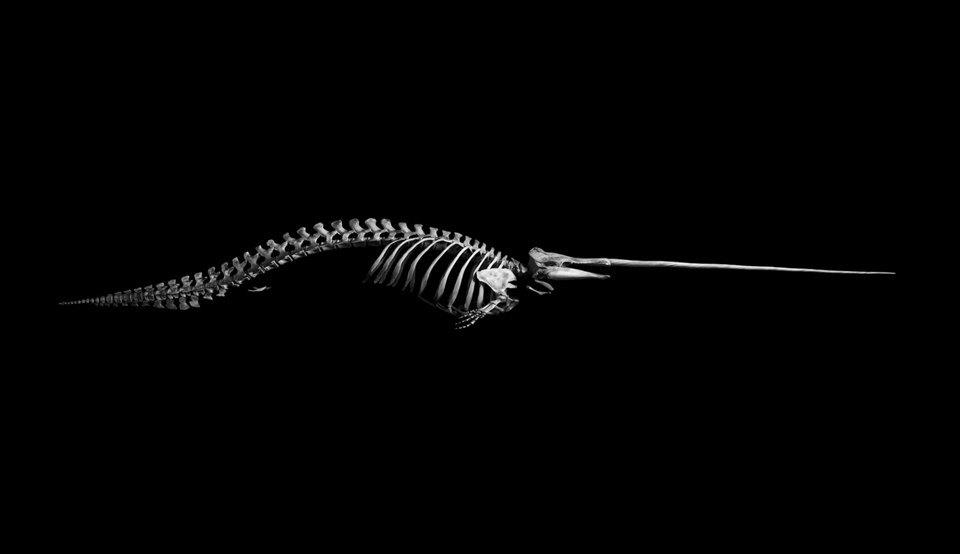 Белое на чёрном: Скелеты животных в фотоальбоме «Evolution» . Изображение № 10.