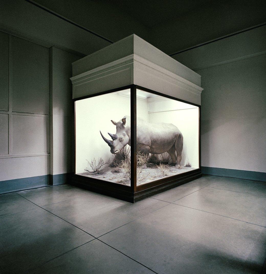 «Museology»:  Тайная жизнь  музейных экспонатов. Изображение № 7.