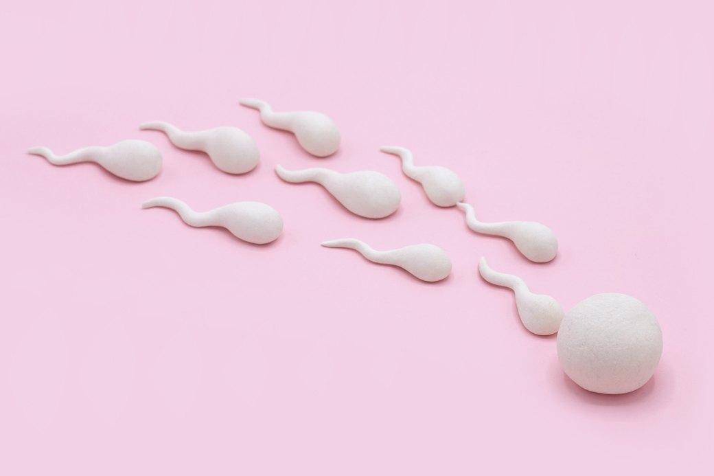 «А если эмбрион украдут?»: 12 дурацких вопросов репродуктологу. Изображение № 2.