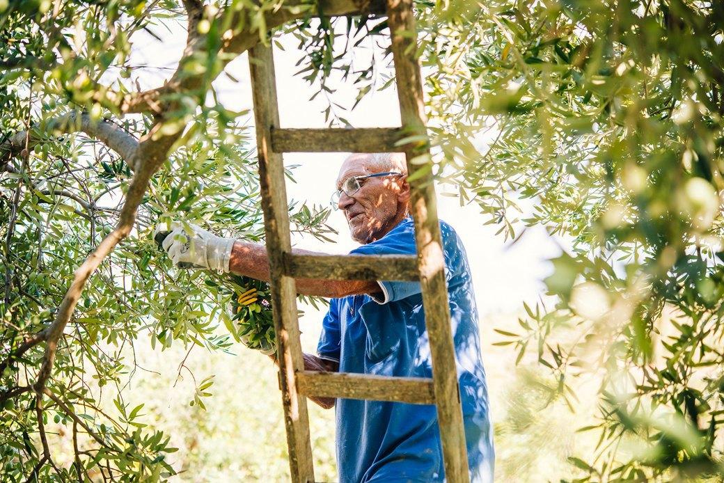 Осень в Италии:  Гастротуризм и сбор  олив на Сицилии. Изображение № 2.