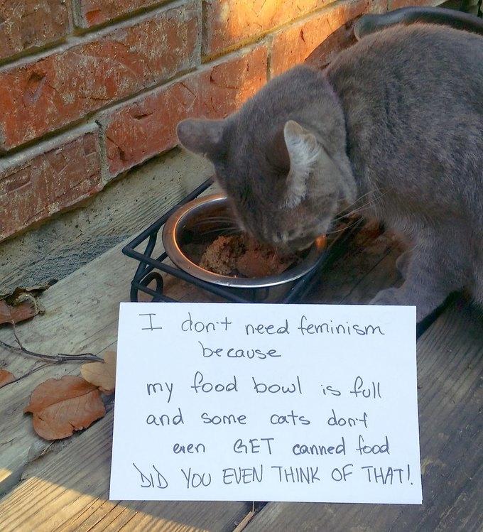 В новом тумблоге кошки борются с феминизмом  (на самом деле нет). Изображение № 8.