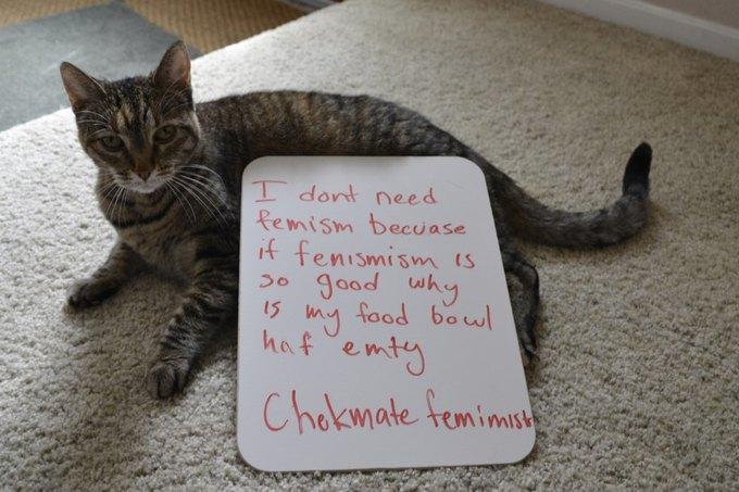 В новом тумблоге кошки борются с феминизмом  (на самом деле нет). Изображение № 9.