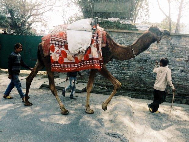 Индия — Непал на автобусе и поезде  за 38 дней. Изображение № 26.