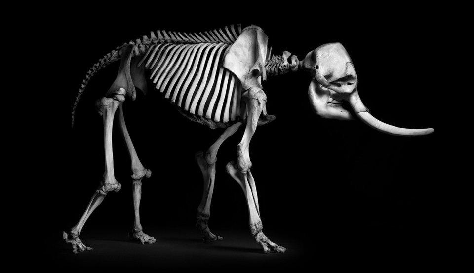 Белое на чёрном: Скелеты животных в фотоальбоме «Evolution» . Изображение № 5.