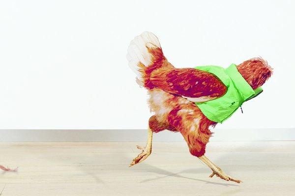 Для кампании магазинов Harvey Nichols сняли безголовых куриц. Изображение № 2.