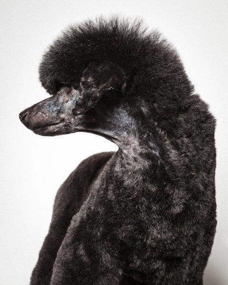 «Стриженые»: Собаки как арт-объект. Изображение № 6.