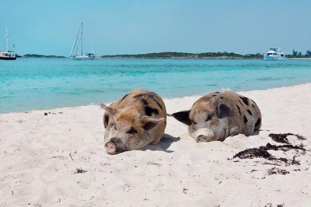 Идеи для путешествий: Необычные пляжи мира. Изображение № 6.