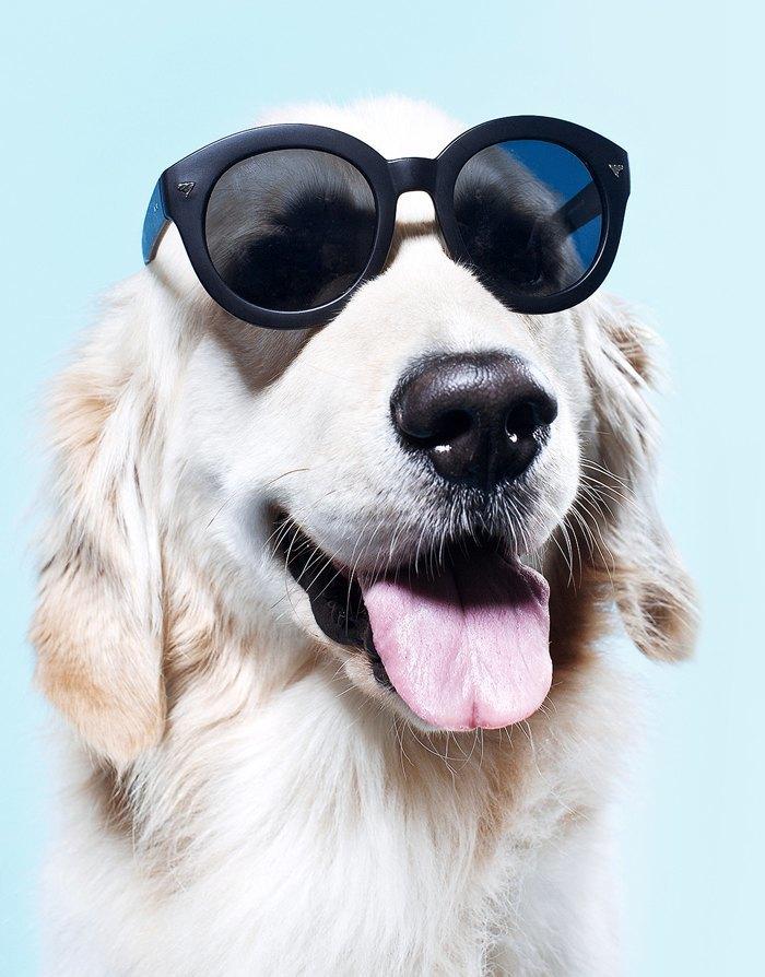 Ревизия: Солнцезащитные очки. Изображение № 9.