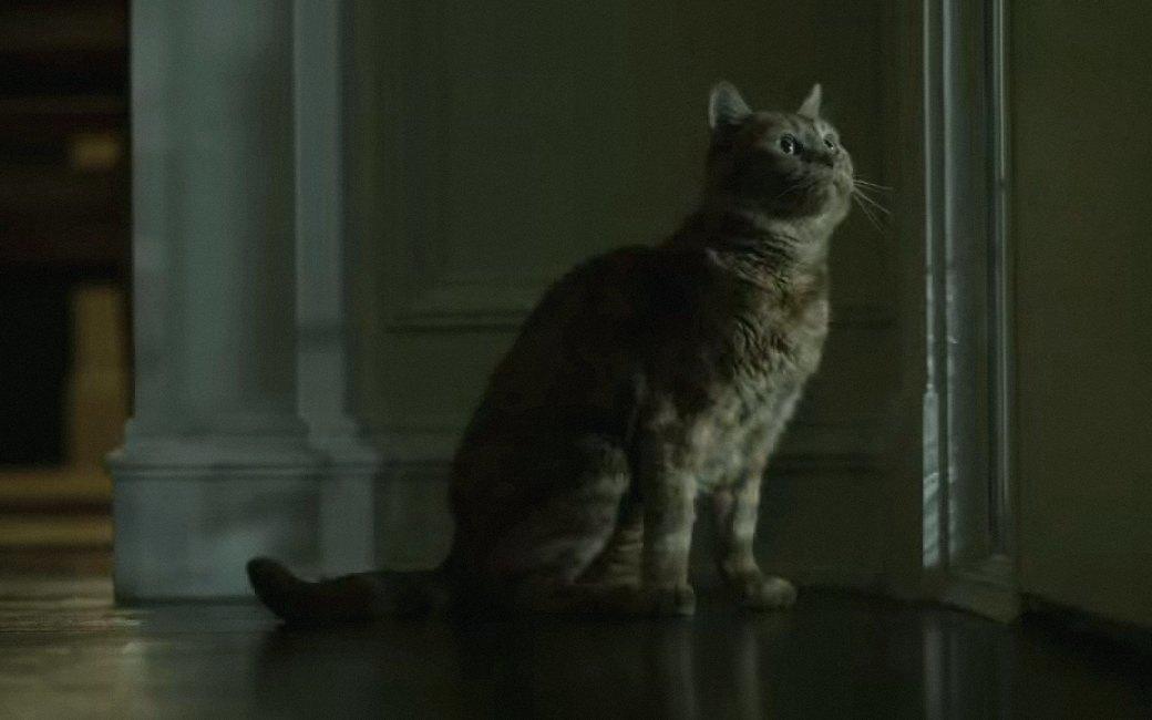 Наглая морда: Лучшие рыжие  коты в кино . Изображение № 2.