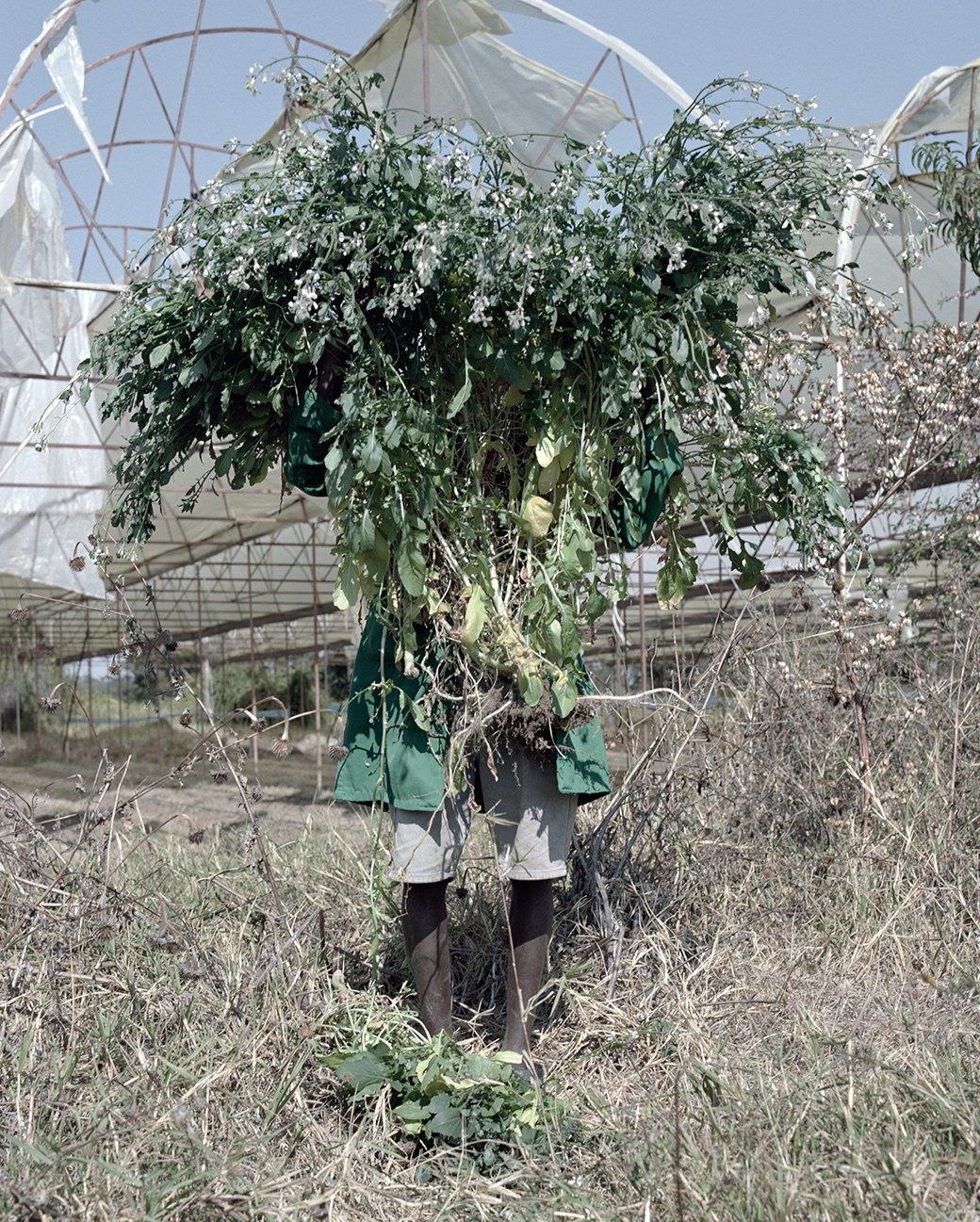 «Местность»: Обезличенный труд африканских крестьян. Изображение № 12.