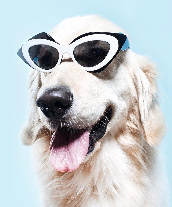 Ревизия: Солнцезащитные очки. Изображение № 16.