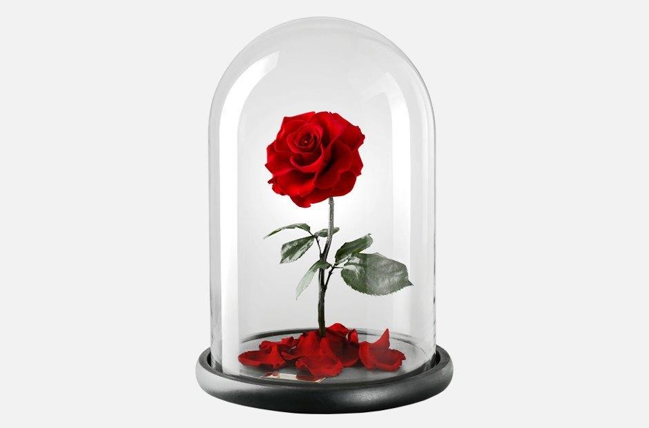Роза из «Красавицы и чудовища». Изображение № 1.