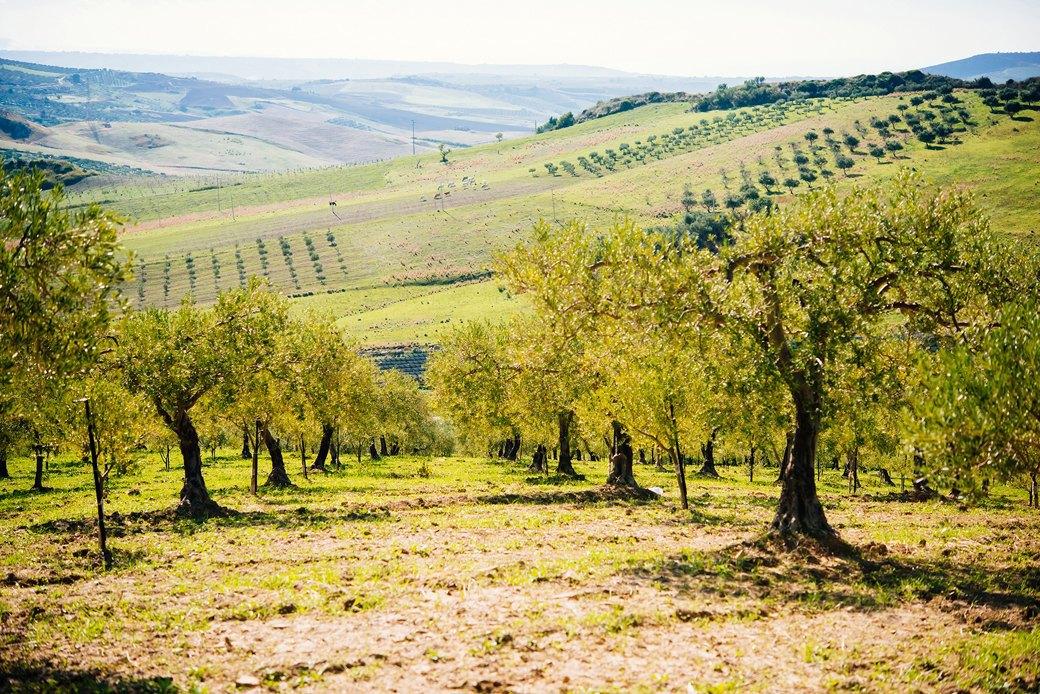 Осень в Италии:  Гастротуризм и сбор  олив на Сицилии. Изображение № 18.