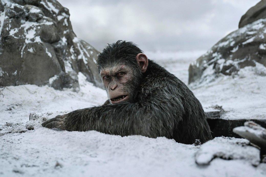 Эволюция духовности: Что говорит о людях «Планета обезьян». Изображение № 1.