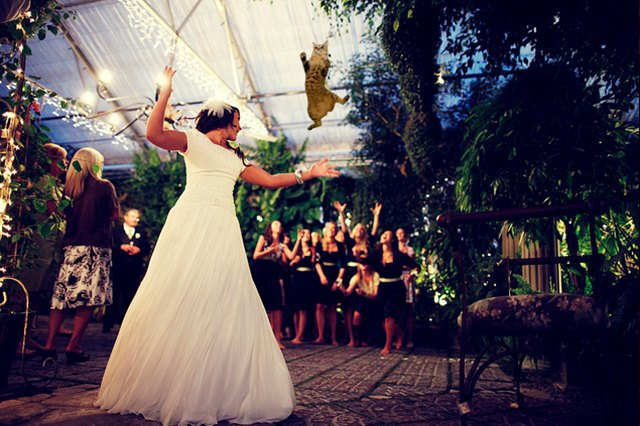 Блог Brides Throwing Cats про невест и летающих кошек. Изображение № 6.