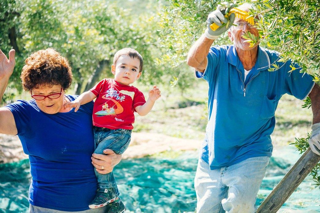 Осень в Италии:  Гастротуризм и сбор  олив на Сицилии. Изображение № 8.