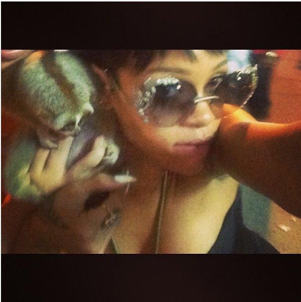 Selfie Рианны и обезьяны помог накрыть нелегальный бизнес. Изображение № 1.