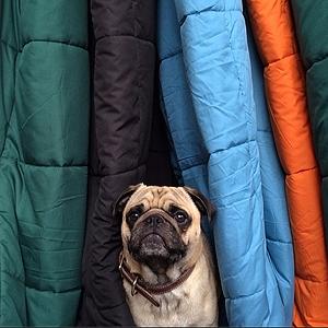 11 классных  звериных аккаунтов  в Instagram. Изображение № 44.