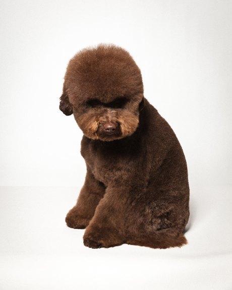 «Стриженые»: Собаки как арт-объект. Изображение № 7.