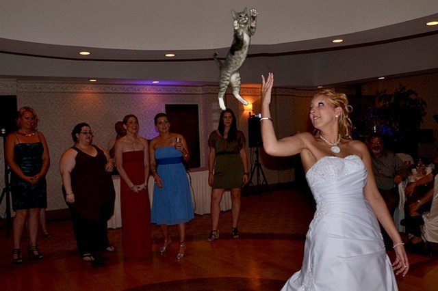 Блог Brides Throwing Cats про невест и летающих кошек. Изображение № 2.