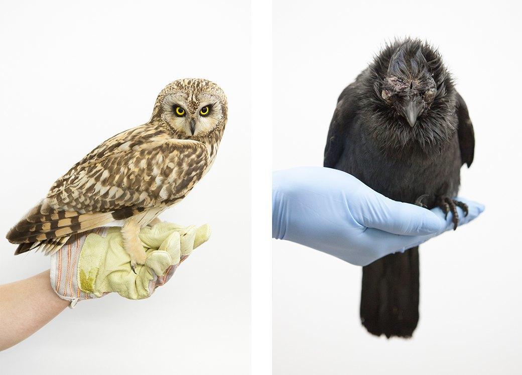 «Birds Don't Cry»: Сова, чайка и другие постояльцы приюта для птиц. Изображение № 11.