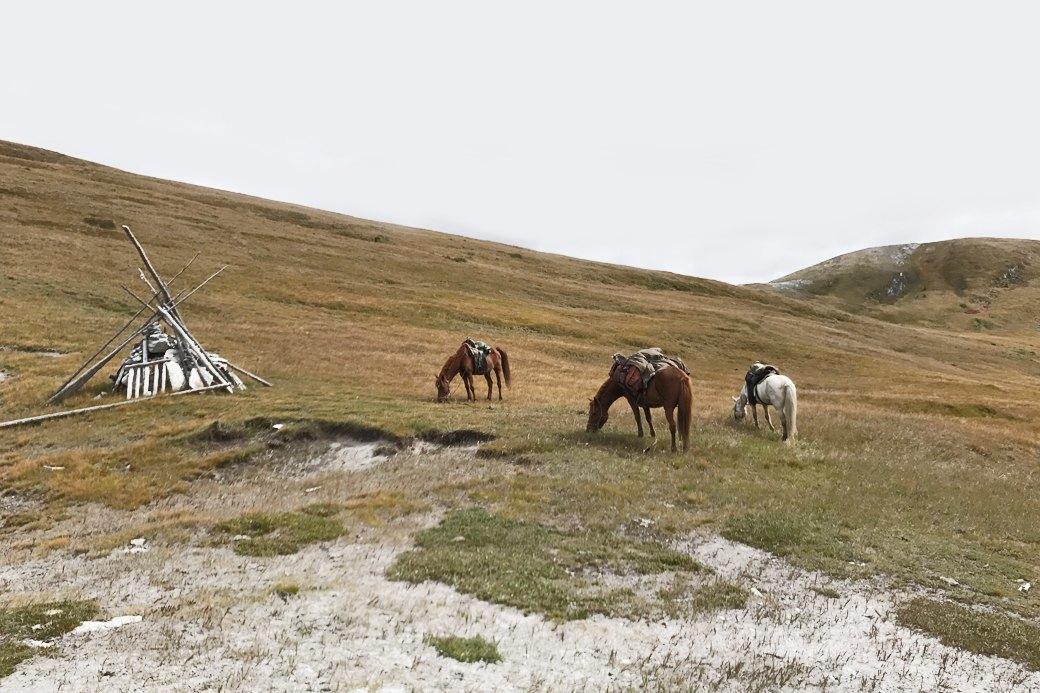 Три лошади и Чука: Как я путешествовала по Монголии. Изображение № 2.