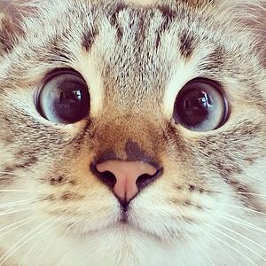 11 классных  звериных аккаунтов  в Instagram. Изображение № 20.