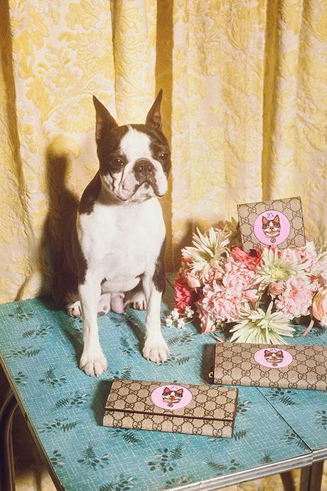 Новая кампания Gucci с умилительными псами. Изображение № 7.