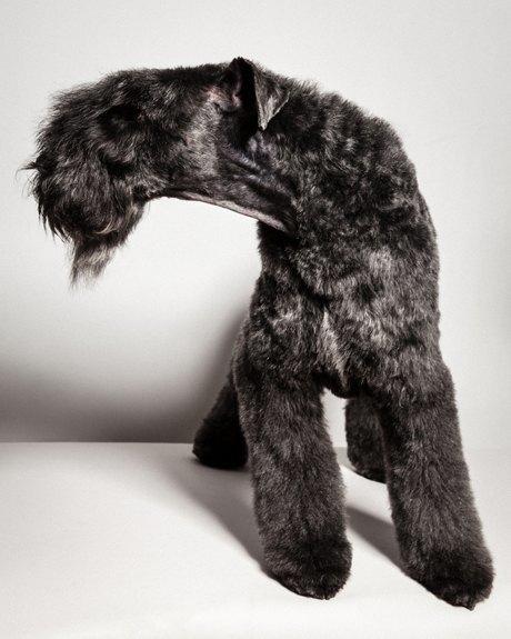 «Стриженые»: Собаки как арт-объект. Изображение № 4.