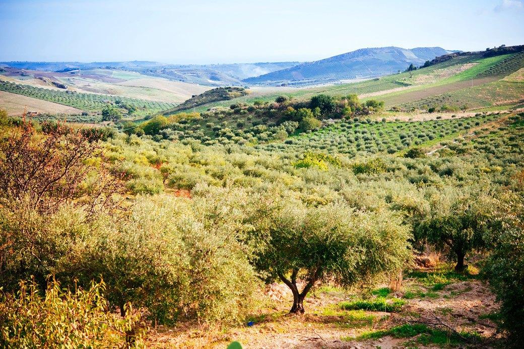 Осень в Италии:  Гастротуризм и сбор  олив на Сицилии. Изображение № 11.