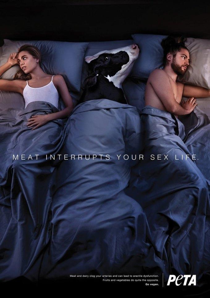 В новой кампании PETA животные мешают людям заниматься сексом. Изображение № 1.