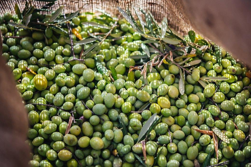 Осень в Италии:  Гастротуризм и сбор  олив на Сицилии. Изображение № 10.
