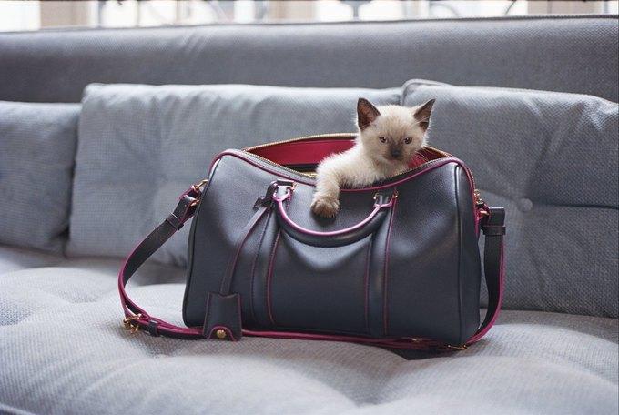 София Коппола создала еще одну сумку с Louis Vuitton . Изображение № 2.
