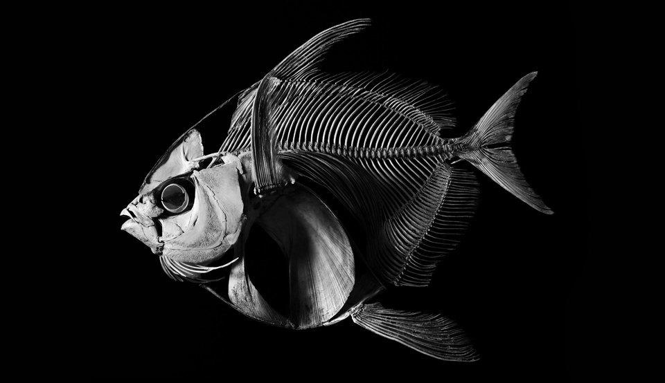 Белое на чёрном: Скелеты животных в фотоальбоме «Evolution» . Изображение № 2.