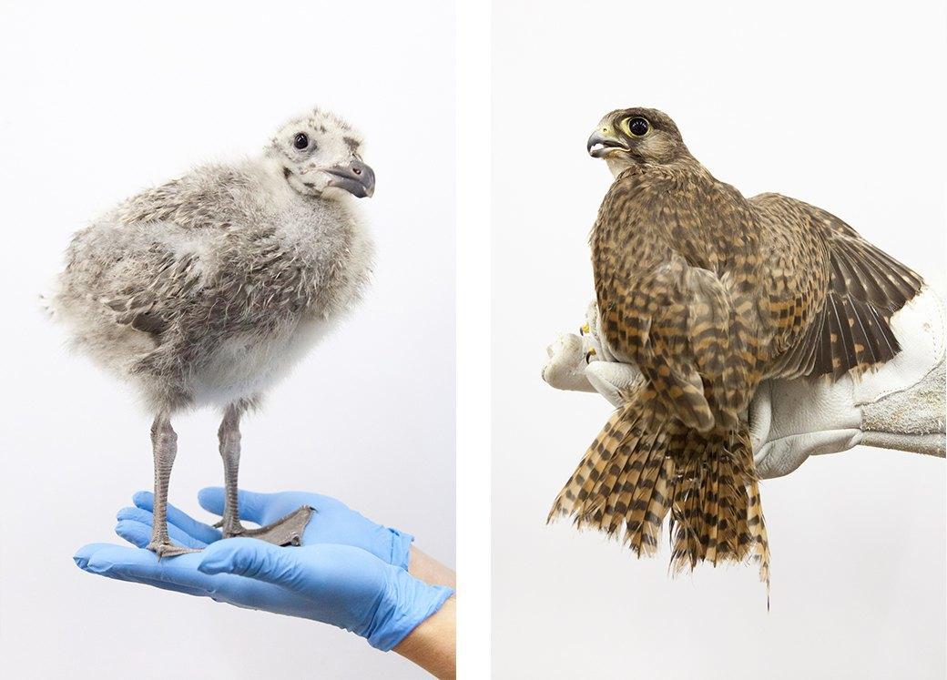 «Birds Don't Cry»: Сова, чайка и другие постояльцы приюта для птиц. Изображение № 13.