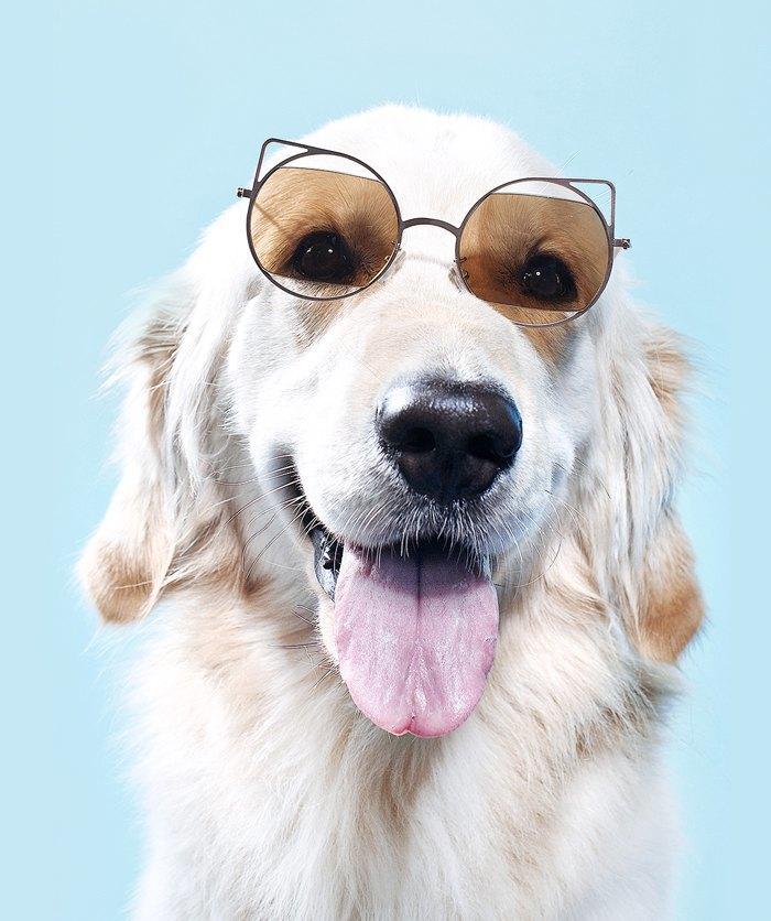 Ревизия: Солнцезащитные очки. Изображение № 4.