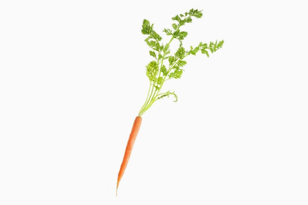 Что такое ГМО:  Угроза здоровью  или будущее планеты. Изображение № 1.