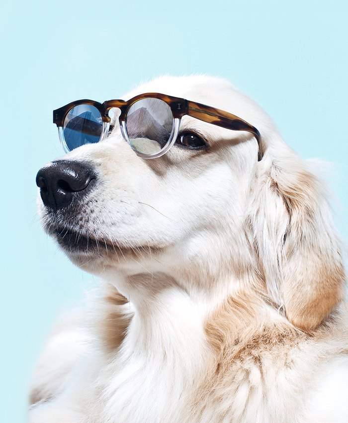 Ревизия: Солнцезащитные очки. Изображение № 12.