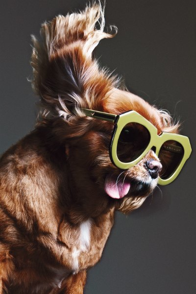 В лукбуке Karen Walker снялась собака — звезда Instagram. Изображение № 12.
