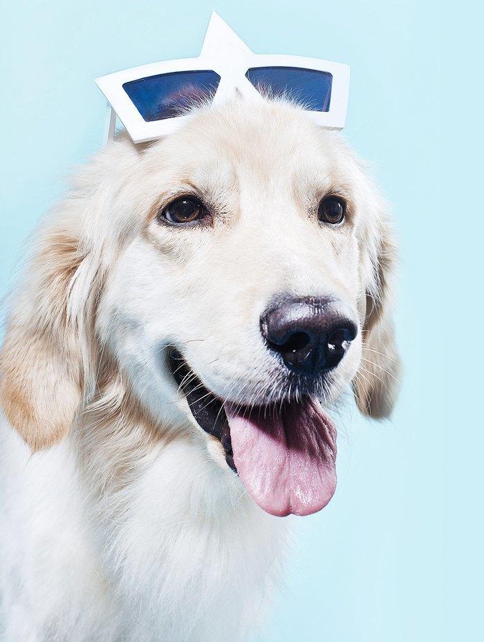 Ревизия: Солнцезащитные очки. Изображение № 5.