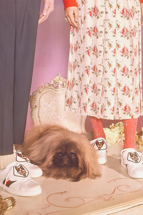 Новая кампания Gucci с умилительными псами. Изображение № 17.