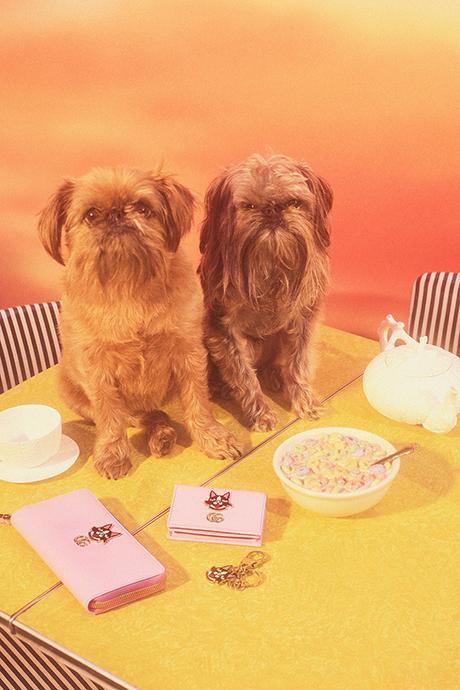 Новая кампания Gucci с умилительными псами. Изображение № 5.