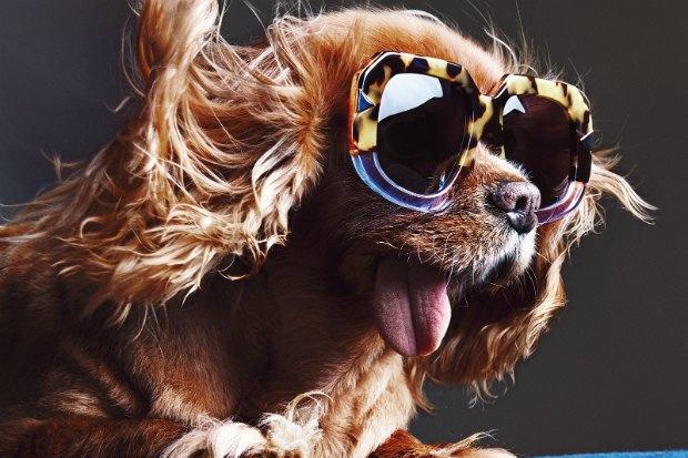 В лукбуке Karen Walker снялась собака — звезда Instagram. Изображение № 6.