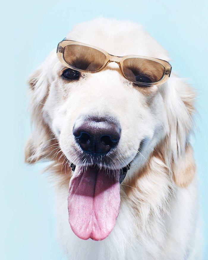 Ревизия: Солнцезащитные очки. Изображение № 8.