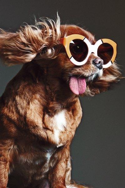 В лукбуке Karen Walker снялась собака — звезда Instagram. Изображение № 4.