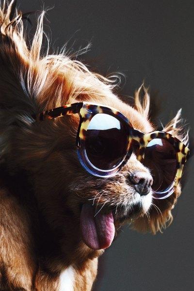 В лукбуке Karen Walker снялась собака — звезда Instagram. Изображение № 13.