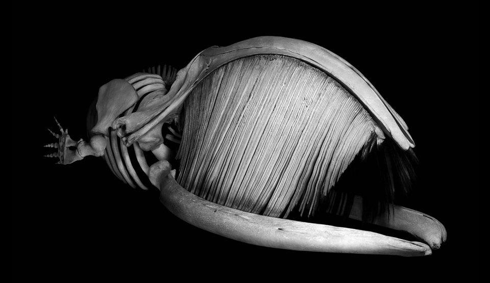 Белое на чёрном: Скелеты животных в фотоальбоме «Evolution» . Изображение № 14.